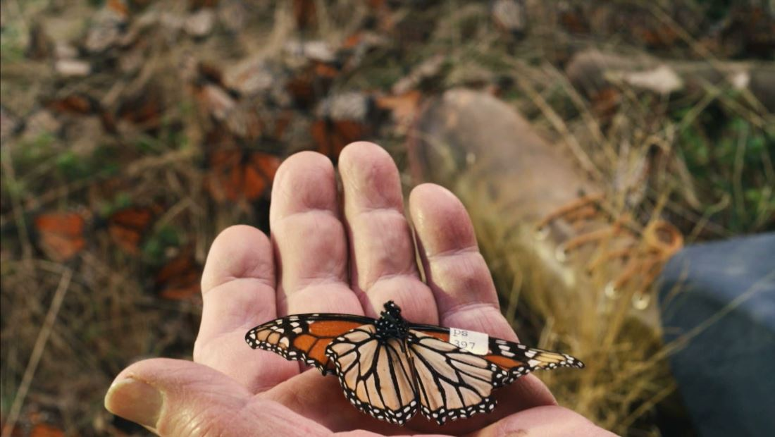 El vuelo de las mariposas