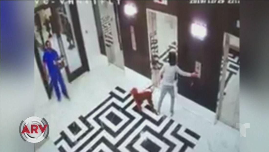 Un perro se quedó enredado con su correa en un elevador