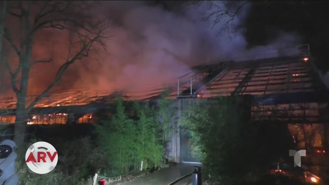Más de cien animales mueren por incendio en un zoológico