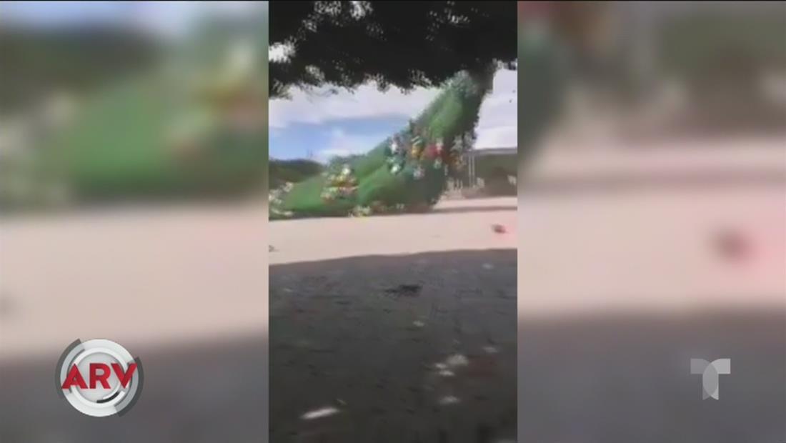 Violenta ventolera tira al suelo a un enorme árbol de navidad