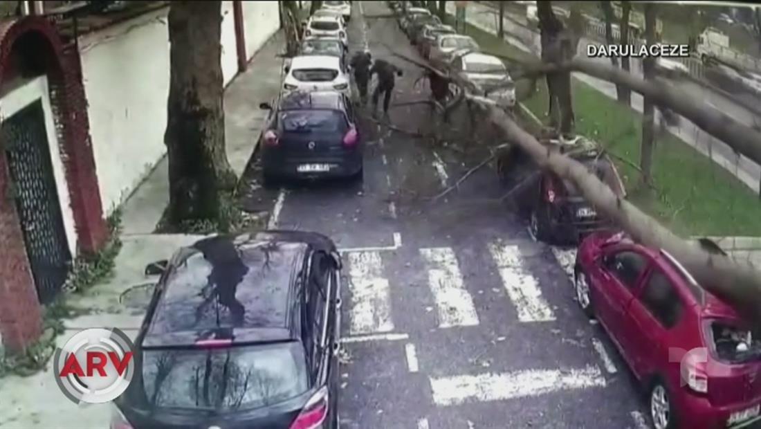 Un árbol se desploma sobre tres transeúntes en Turquía