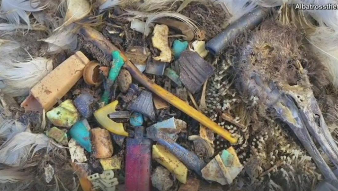 Un mar de plásticos causa la muerte de animales y amenaza nuestra salud