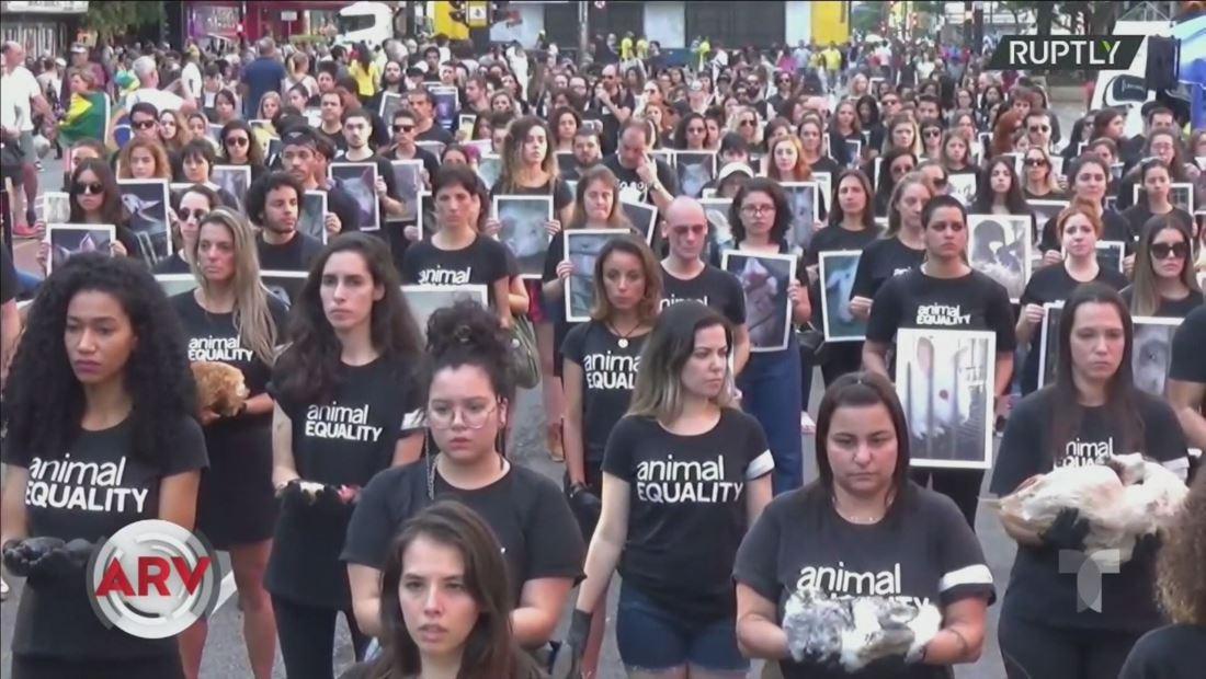 Activistas protestan con animales muertos en contra de la crueldad animal