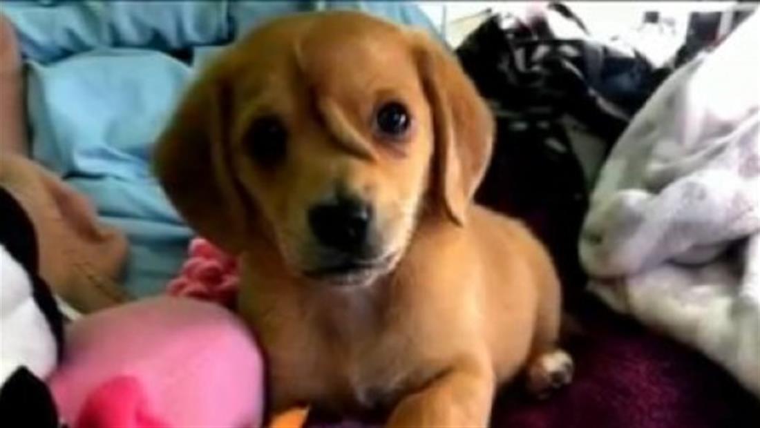 Perro nace con cola en la frente y provoca decenas de solicitudes de adopción