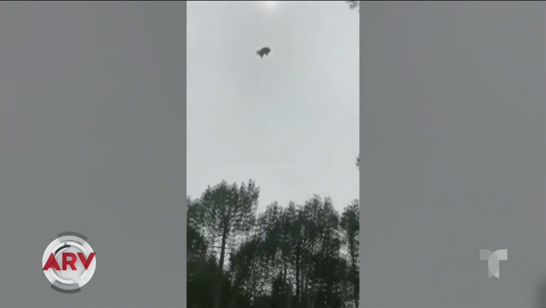 Lanzan un cerdo vivo desde un helicóptero y causa indignación en Uruguay