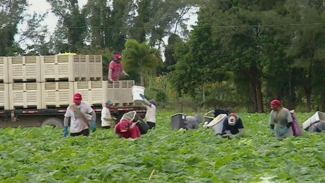 Plan de legalización para trabajadores agrícolas avanza en el congreso