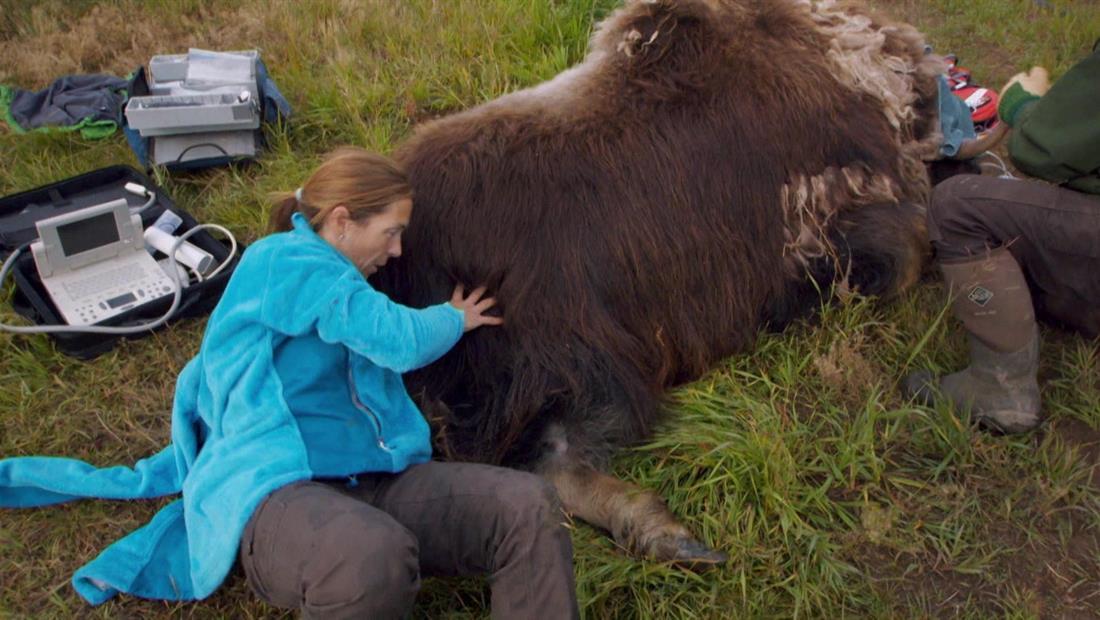 Grandes Animales, Grandes Problemas