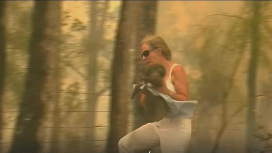 El emotivo reencuentro de un koala con la mujer que lo salvó de un incendio