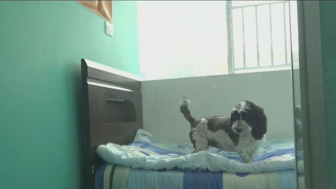 Hotel cinco estrellas para mascotas causa sensación en Bolivia